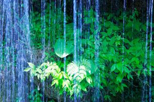 滝状の岩清水と若葉の写真素材 [FYI02465960]