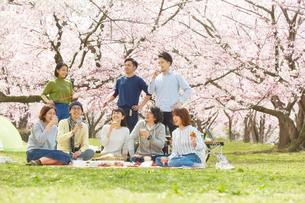 お花見をする男女8人の写真素材 [FYI02466193]