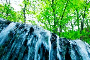 滝状の岩清水と新緑の樹林の写真素材 [FYI02466334]