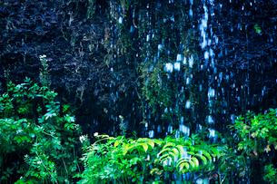 滝状の岩清水の写真素材 [FYI02466766]