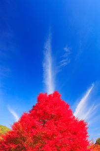紅葉のモミジと秋空の写真素材 [FYI02467199]