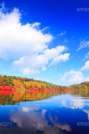 水鏡のドウダンツツジなどの紅葉の樹林の写真素材 [FYI02467698]
