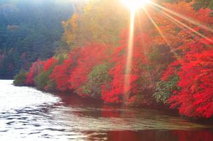 水鏡のドウダンツツジなどの紅葉の樹林と夕日の木もれ日の光芒の写真素材 [FYI02467835]