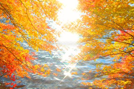 ドウダンツツジの紅葉と輝く水面の写真素材 [FYI02467848]