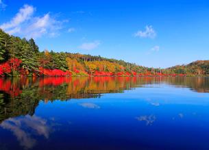水鏡のドウダンツツジなどの紅葉の樹林の写真素材 [FYI02468055]