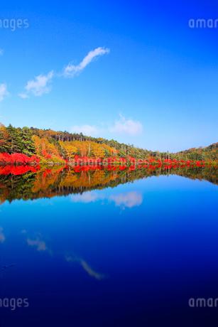水鏡のドウダンツツジなどの紅葉の樹林の写真素材 [FYI02468365]