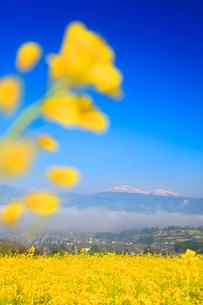 福島の棚田から望む朝霧の雲海と菜の花公園と妙高山の写真素材 [FYI02468574]