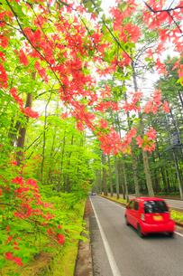 ツツジと新緑の旧軽井沢の別荘地の道路と通行する車の写真素材 [FYI02468651]