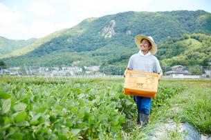 野菜が入ったカゴを抱えて畑を歩く男性の写真素材 [FYI02468698]