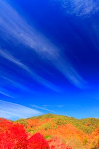 紅葉のモミジの林と秋空の写真素材 [FYI02468920]