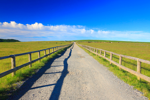 牧場の道とホルスタインと黒毛和牛と馬の写真素材 [FYI02469004]