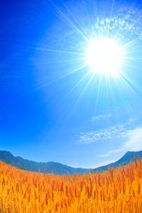 小麦畑と太陽の光芒と独鈷山と女神岳の写真素材 [FYI02469086]