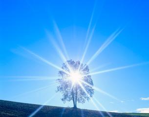 朝の木もれ日の光芒と木立の写真素材 [FYI02469097]