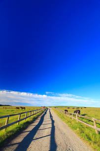 牧場の道とホルスタインと黒毛和牛と馬の写真素材 [FYI02469221]
