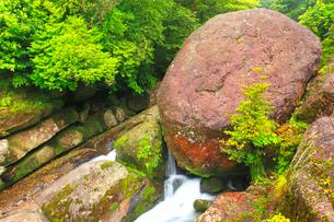 白谷川の岩清水の写真素材 [FYI02469260]