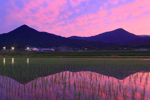水鏡の田園と夫神岳と女神岳と夕焼けの写真素材 [FYI02469360]