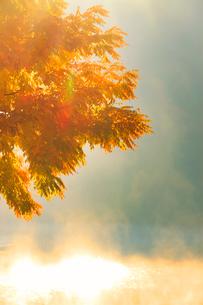 黄金アカシアの紅葉と朝霧の聖湖の写真素材 [FYI02469690]
