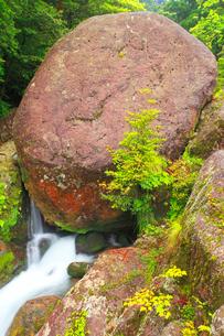 白谷川の岩清水の写真素材 [FYI02469759]