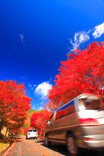 紅葉のモミジの並木と道路と自動車の写真素材 [FYI02469887]