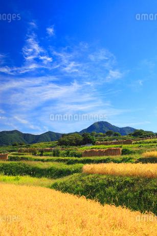 稲穂実る棚田と冠着山の写真素材 [FYI02470132]