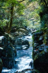 音水渓谷の滝の写真素材 [FYI02474283]