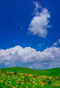 ニッコウキスゲと入道雲とわた雲の写真素材 [FYI02474433]
