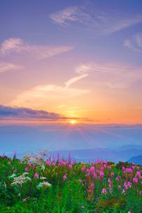 ヤナギランとシシウドと槍ヶ岳など北アルプスの山並みと夕日の写真素材 [FYI02474604]