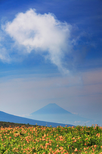 ニッコウキスゲと富士山の写真素材 [FYI02474638]