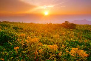 アキノキリンソウと穂高連峰方向の山並みと夕日の写真素材 [FYI02474775]