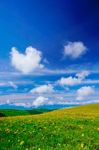 ニッコウキスゲとハート型の雲の写真素材 [FYI02474802]