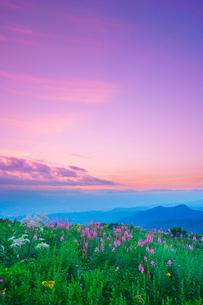ヤナギランとシシウドと立山など北アルプスの山並みと夕焼けの写真素材 [FYI02474855]