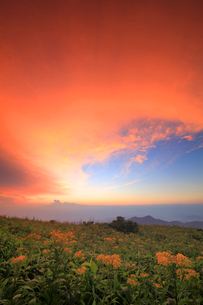 アキノキリンソウと北西方向の山並みと夕焼けの写真素材 [FYI02474873]
