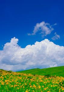 ニッコウキスゲと入道雲の写真素材 [FYI02474891]