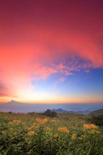 アキノキリンソウと北西方向の山並みと夕焼けの写真素材 [FYI02474985]