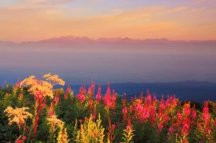 ヤナギランとシシウドと穂高連峰と朝日を反射する槍ヶ岳山荘の写真素材 [FYI02475012]
