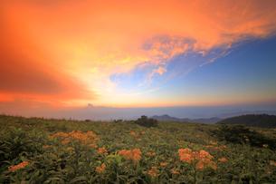 アキノキリンソウと北西方向の山並みと夕焼けの写真素材 [FYI02475034]