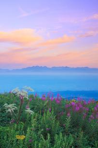 朝焼け空とヤナギランとシシウドと穂高連峰と槍ヶ岳の写真素材 [FYI02475177]