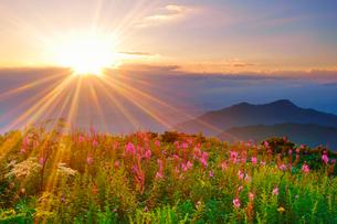 思い出の丘のヤナギランとシシウドと夕日の写真素材 [FYI02475236]