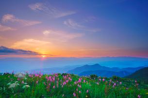 ヤナギランとシシウドと白馬岳など北アルプスの山並みと夕日の写真素材 [FYI02475240]
