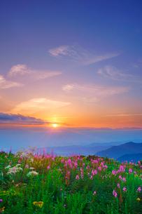 ヤナギランとシシウドと立山など北アルプスの山並みと夕日の写真素材 [FYI02475406]