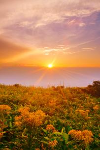 アキノキリンソウと穂高連峰方向の山並みと夕日の写真素材 [FYI02475634]