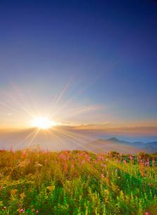 思い出の丘のヤナギランとシシウドと夕日の写真素材 [FYI02475639]