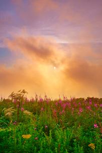 思い出の丘のヤナギランとシシウドと雲間の夕日の写真素材 [FYI02475753]