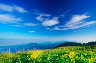 アキノキリンソウと白馬岳など北アルプスの山並みの写真素材 [FYI02475767]