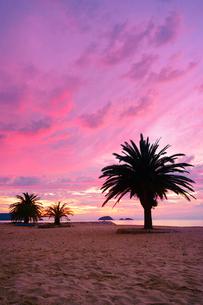 小部ビーチとナツメヤシと夕焼けと大島の写真素材 [FYI02475872]