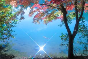 モミジと輝く水面の写真素材 [FYI02478566]