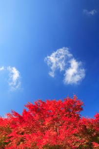 紅葉のモミジと雲の写真素材 [FYI02479369]