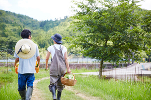 野菜を入れたカゴを持って歩く男女の後ろ姿の写真素材 [FYI02481306]