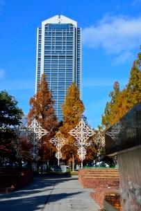 紅葉,神戸市役所の写真素材 [FYI02490074]