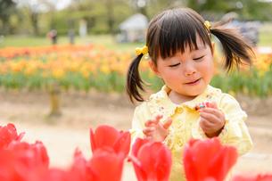 春の公園でチューリップ畑で遊ぶ女の子の写真素材 [FYI02494860]